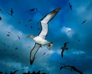 flock-of-seagulls-wallpapers_8880_1280x1024